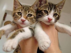 Health Insurance for Kittens