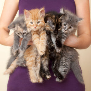 caring for abandoned kittens