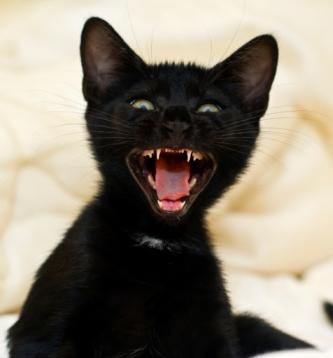 Kitten Teeth Top Tips For Dental Care Raising Happy Kittens