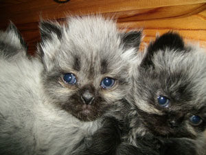 caring for sick kittens