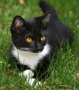 best pet health insurance for kittens