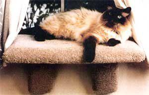 Cat window perch and shelf