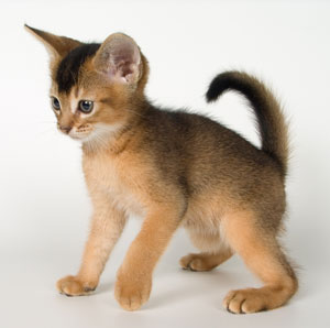 How To Soften Cat Food For Kittens