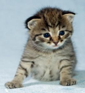 prepare for kitten birth