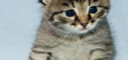 kmr kitten formula feeding instructions