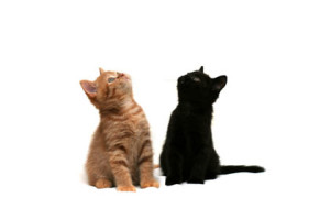 providing kitten care