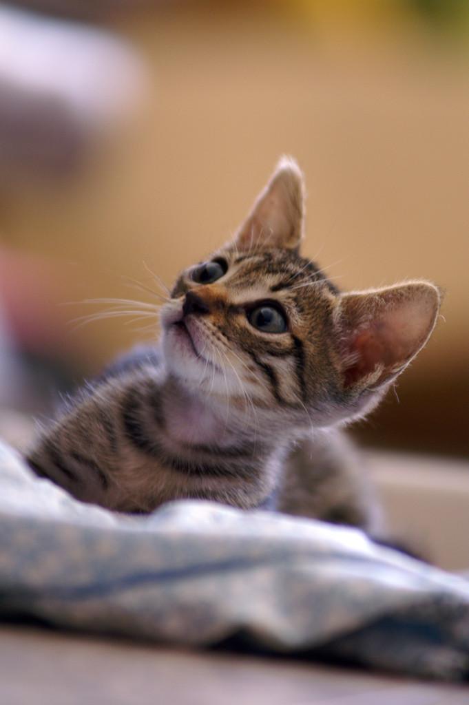 feral tom cat behavior