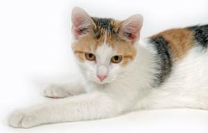 feline leukemia symptoms