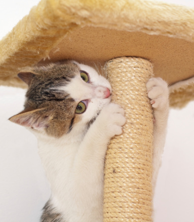 Cat Scratching Trees: A Must-Have Kitten Item