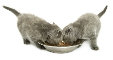 what are the best kitten food choices?