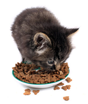 science diet kitten food