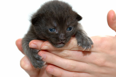 Newborn Kitten Care: What to Expect During the Birth