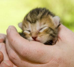 feeding orphaned kittens