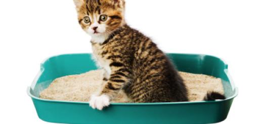 training archives raising happy kittens
