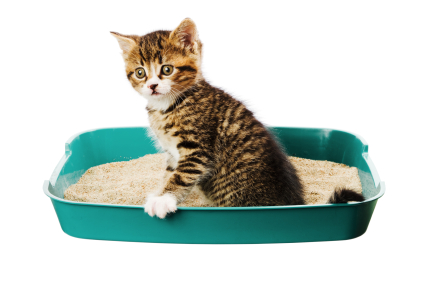 Litter Box Training Your New Kitten