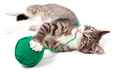 Kitten Games: Bonding With Your Kitten Through Play