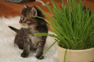 kitten chews plants