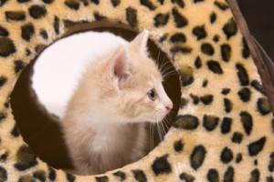 help choosing kitten names