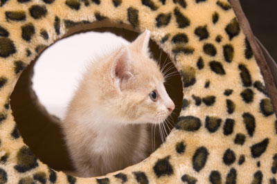 Stumped on Kitten Names? These Tips Might Help!