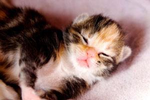 Introduction to the Newborn Kitten - Raising Happy Kittens