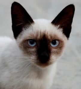 parasites in kittens