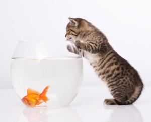 kitten care tips