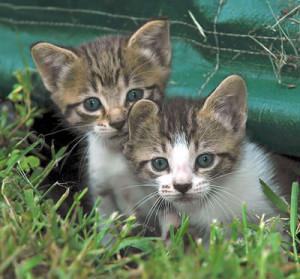 best kitten health tips