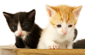 how to select a low cost pet insurance policy