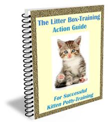 Raising Kittens Litter Box Training