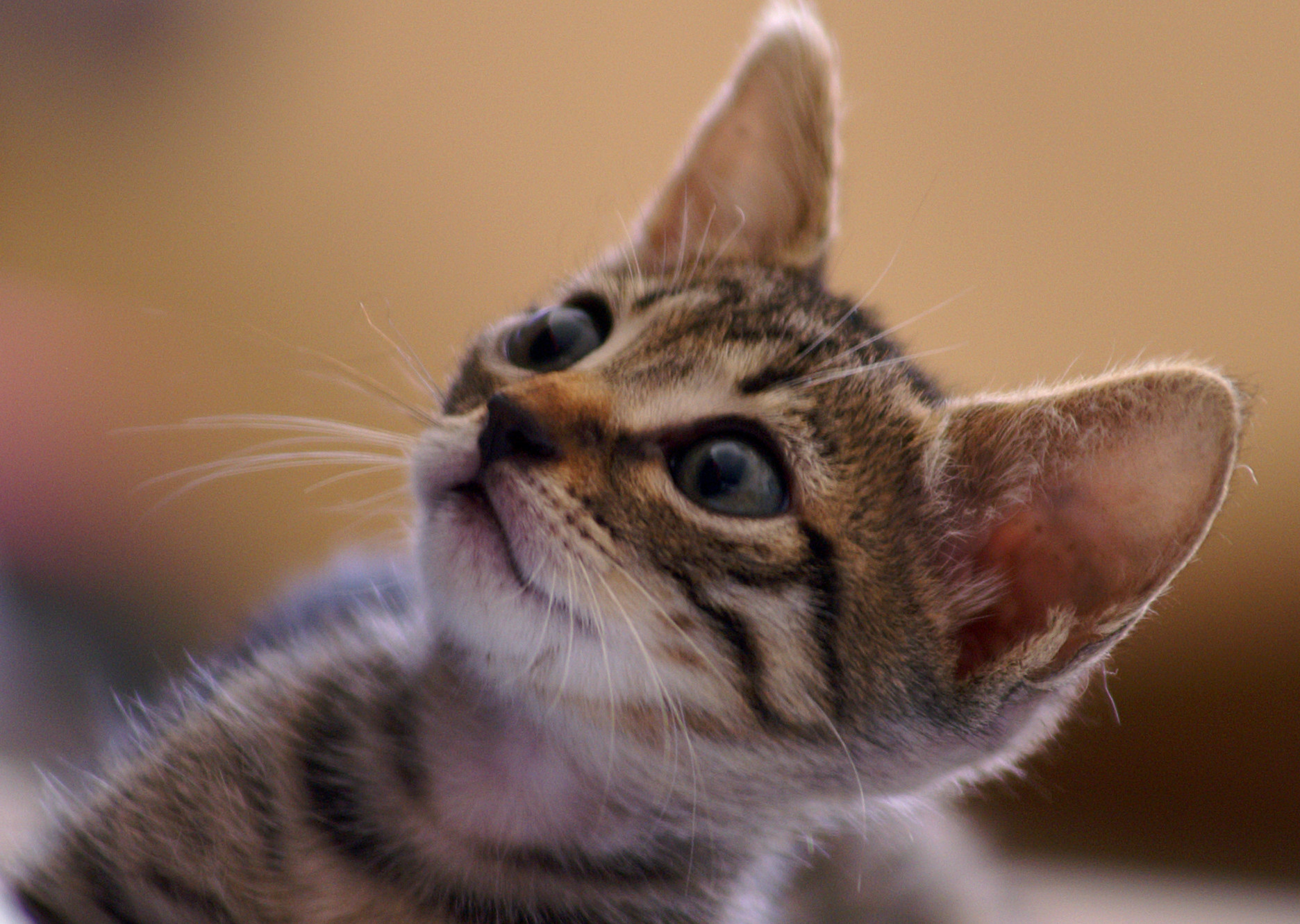 Kitten Training: Five Tips to Easily Train Your Kitten