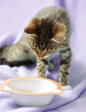The Purina Cat Food Recall and its Aftermath