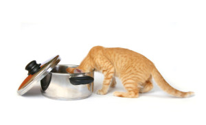 cat food reviews