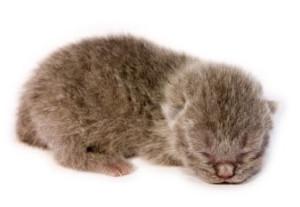 1 day old kitten