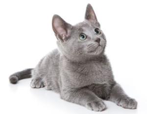 3 month old kitten development