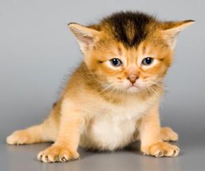 kitten development at 3 weeks