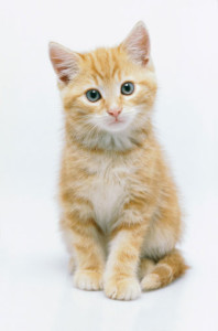 2 month old kitten