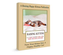 Raising Kittens: Your Must-Have Guide