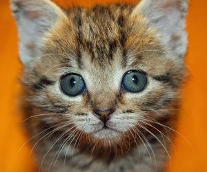 funny names for kittens