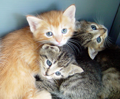 Orphaned Kittens: Urgent Home Care