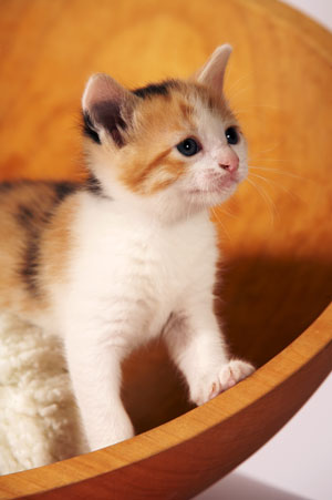 The Best Girl Kitten Names A-Z