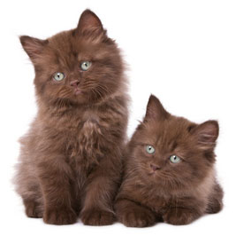 The Best Male Kitten Names A-Z