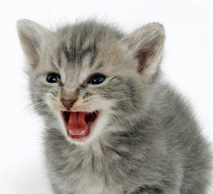 Kitten Aggression and Biting: Q&A
