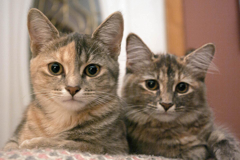 cat care articles