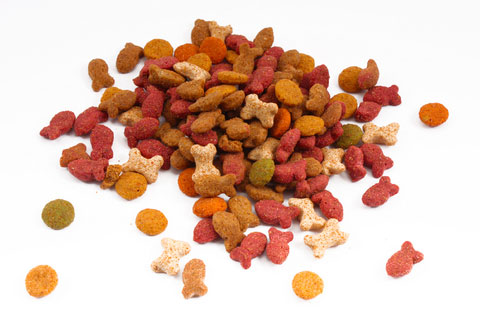 High Protein Dry Kitten Food